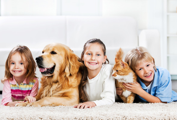 Pet Odour Removal